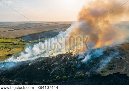 Burning Dry Grass And Trees. Natural Disaster In Forest, Aerial View From Drone. Summer Wildfire. Fi