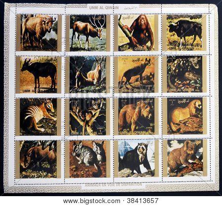 UMM AL QIWAIN - CIRCA 1973: Collectie stempels afgedrukt um al Qiwain toont dieren sterven uit circa
