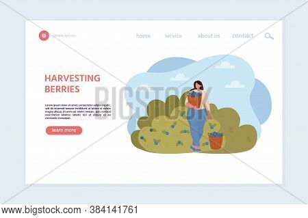 Concept Of Landing Page On Harvesting Berries. Woman Picking Berries. Autumn Season. Activity, Vacat