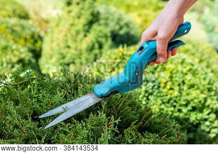 Close-up Female Gardener Worker Hand Holding In Arm Grass Cutting And Trimming Shears And Pruning Bo