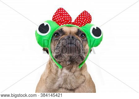 Funny Portrait Of French Bulldog Dog Wearing Funny Frog Costume Headband With Ribbon And Big Eyes On