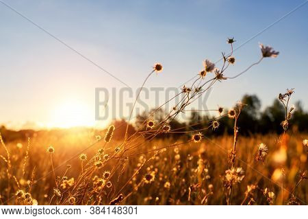 Abstract Warm Landscape Of Dry Wildflower And Grass Meadow On Warm Golden Hour Sunset Or Sunrise Tim