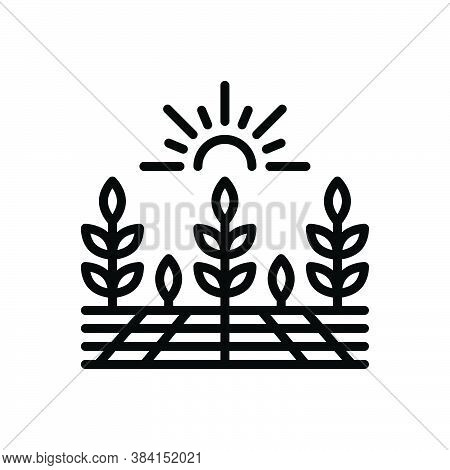 Black Line Icon For Agricultural Farming Agrarian Predial Harvest Crops Prolificacy Yield
