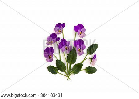 Bouquet Of Beautiful Flowers Viola Tricolor ( Pansy ) On A White Background With Space For Text. Top