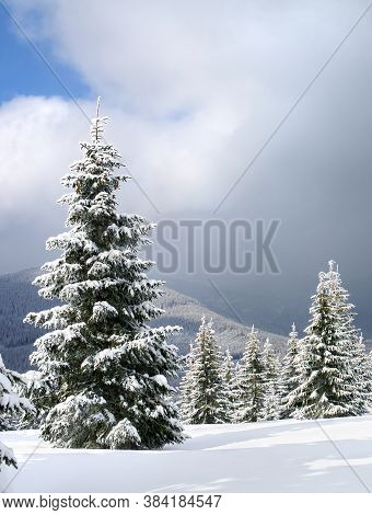 Winter Landscape Of Mountains With Of Fir Tree Forest And Glade In Snow Under Forthcoming Snow Winds