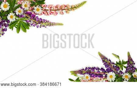 Frame Of Wild Flowers Pink And Violet Lupin (lupinus Albus) And Daisies On A White Background With S
