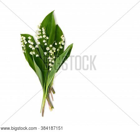 Flowers With Leaves Lily Of The Valley ( Convallaria Majalis, Other Names: May Bells, May-lily, Our
