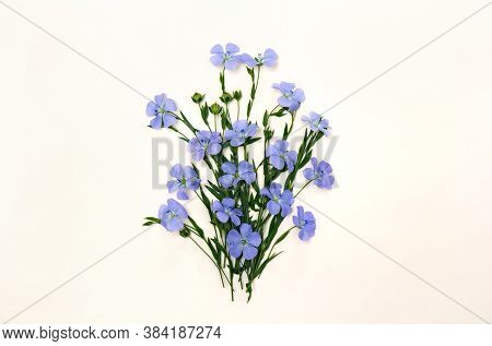Flowers And Capsule With Seed Flax ( Linum Usitatissimum ) Common Names: Common Flax Or Linseed On A