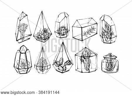Hand Drawn Vector Abstract Stock Flat Graphic Illustrations Collection Set Bundle With Succulent And