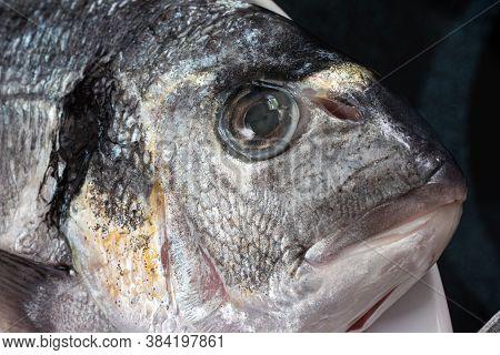 Market Frozen Silver Sea Bream Raw Uncooked Fish Close Up Macro Head Shot