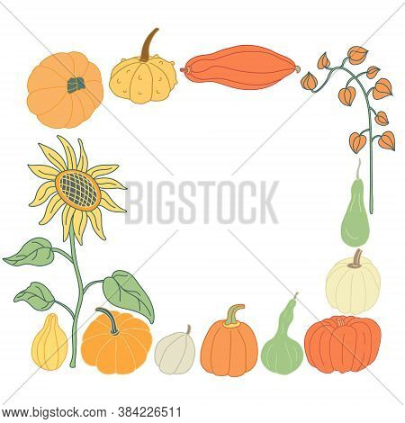 Autumn Square Frame With Sunflower,  Pumpkins And Physalis Branch In Flat Style With Lines.  Hand Dr