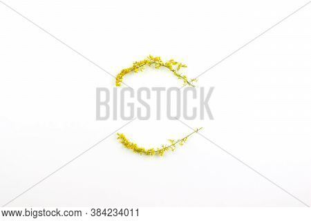 Wreath, Frame Made Of Yellow Mimose Branches Flat Lay On White Background Top View Copy Space. Round