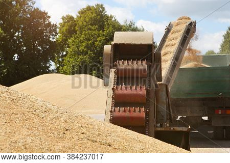 Processing Of Grain After Harvesting. Grain Cleaning Machine, Loads Grain Into The Back Of A Truck.