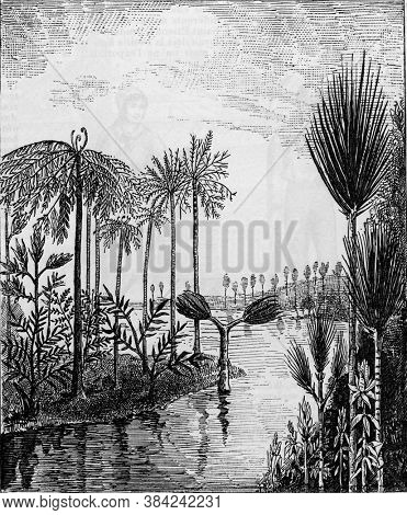 Coal flora landscape restore from the coal era after M. Gaston de Saporta, From the Dictionary of Word and Things, 1888.