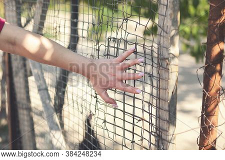 Hands Of A Caucasian Girl On A Wire Fence