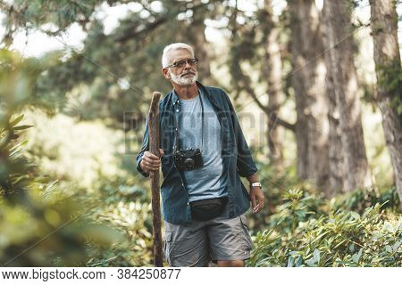 Handsome 60-year-old Senior Man Walks Through Forest With Stick And Camera. Active Lifestyle At Reti