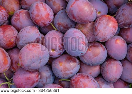 Lots Of Beautiful Ripe Plums, View From Above, Background From Plums.