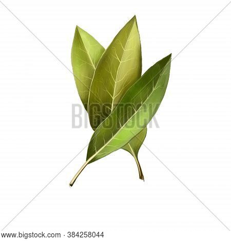 Bay Leaves Isolated On White Background. Dry Bay Leaf. Dried Laurel Bay Leaves In Bundle. Herbs Spic
