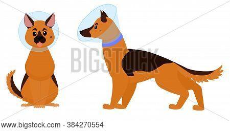 Dog Cone, Cartoon Dog With Elizabethan Collar Isolated On White Background. Plastic Cone Of Shame Ve