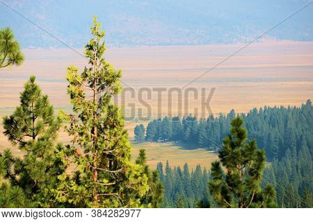 Coniferous Forest On A Mountain Slope Overlooking The Grasslands Of The Sierra Valley Taken From The