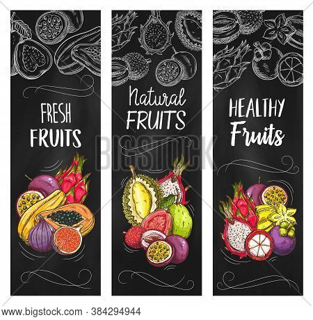 Exotic Fruits Vector Banners With Sketch Pitahaya, Mangosteen And Papaya, Figs, Durian With Carambol