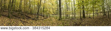 Beautiful Panoramic Forrest In Summer In Germany