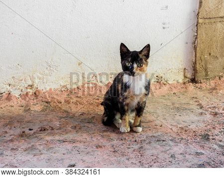 Stray Calico Kitten In A Moroccan Village