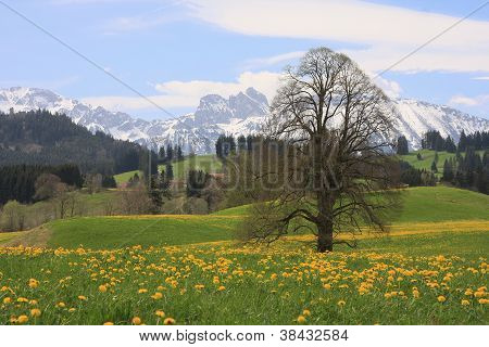 allgaeu alps in spring