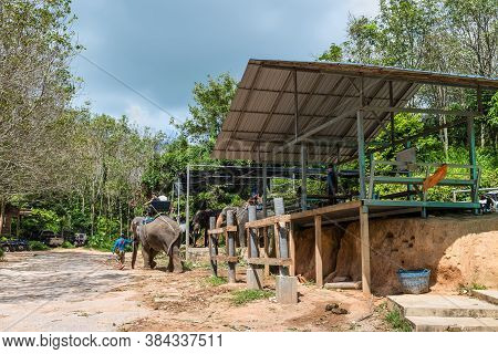 Phuket, Thailand - November 29, 2019: View Of The Elephant Camp And Elephant Trekking Through Jungle