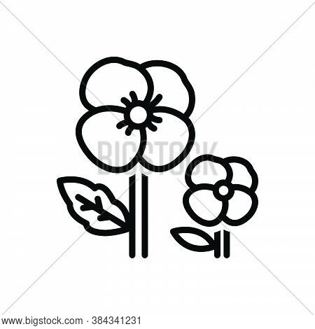Black Line Icon For Pansy Ladylike Florist Spring Petals Fragrance Flower Blossom Delicate Decorate