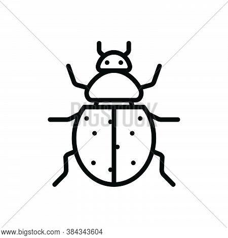 Black Line Icon For Ladybug Bettle Herbivore Insecticide Ladybird Dor Bug Bedbug Chinch Dirty Critte