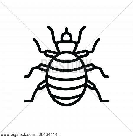 Black Line Icon For Flea Bloodsucking Bite Plague Bug Chigoe Norfolk-howard Disease Bedbug Chinch Di