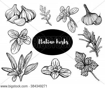 Italian Herbs.set Of Herbs: Savory, Thyme, Garlic, Basil, Onion, Thyme, Oregano, Marjoram.aromatic A