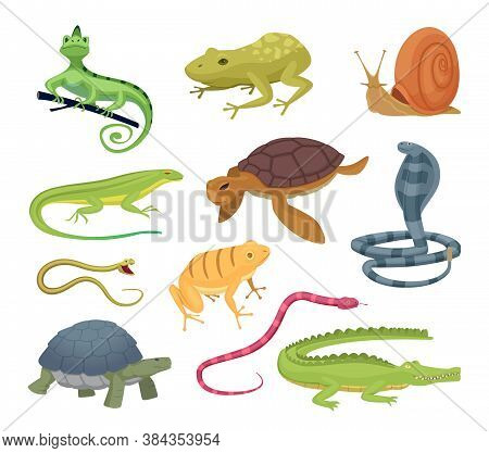 Amphibia And Reptiles. Wild Animals Turtles Reptiles Snakes And Lizards Hot Terrarium Vector Charact