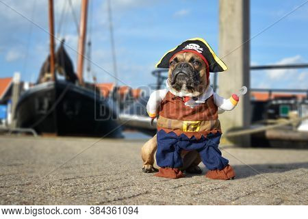 Funny Brown French Bulldog Dog  Dressed Up In Pirate Halloween Costume With Hat And Hook Arm Standin