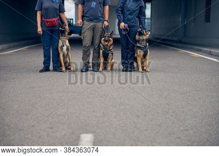 Detection Dogs Sitting Beside Security Guards Outdoors