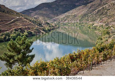 Weinbergen des Douro-Tal, Portugal