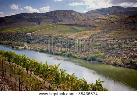Weinbergen des Douro-Tals, portugal