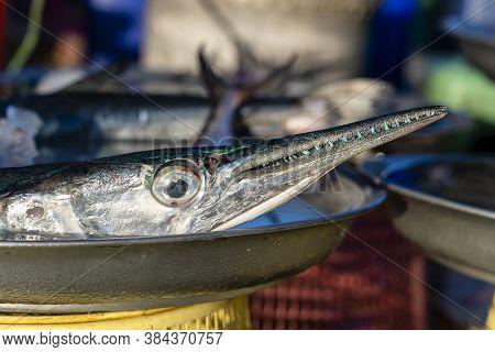 Sea Fresh Fish Barracuda At Food Street Market On Island Koh Samui, Thailand, Close Up. Seafood Conc