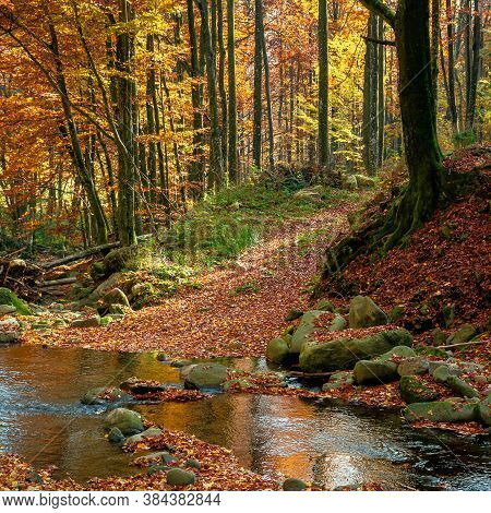 Mountain River In Autumn Forest. Rocks And Fallen Foliage On The Shore. Trees In Yellow And Red Foli