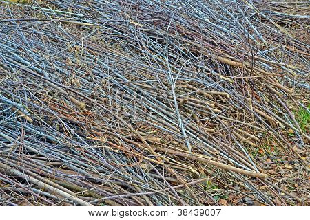 Abstract Brushwood Heap, Seasonal Details