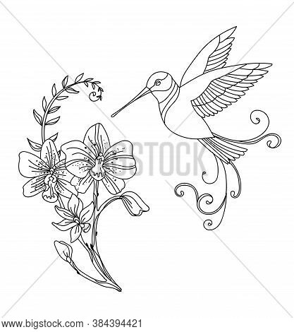 Vector Line Art Colibri Bird And Decorative Flowers. Contour Illustration Isolated On White. Vector