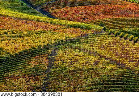 View of colorful vineyards on the hills of Langhe in autumn in Piedmont, Northern Italy.