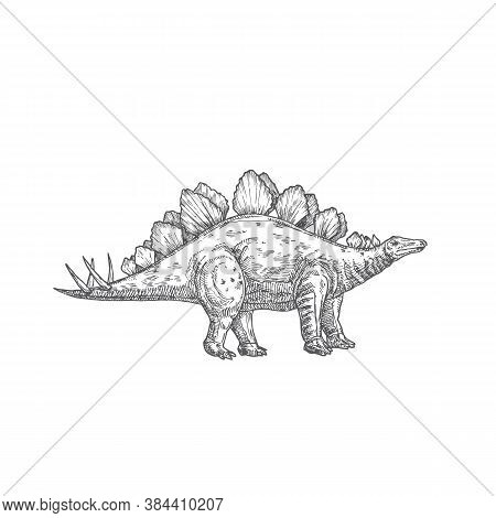 Prehistoric Dinosaur Doodle Vector Illustration. Hand Drawn Stegosaurus Reptile Engraving Style Draw