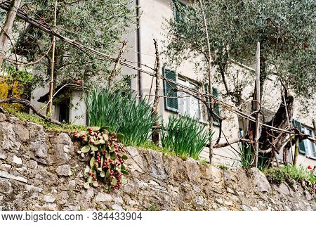 Lingonberry Bush And Shallots In A Garden Bed Near A Rocky Cliff Near Multi-storey Residential Build