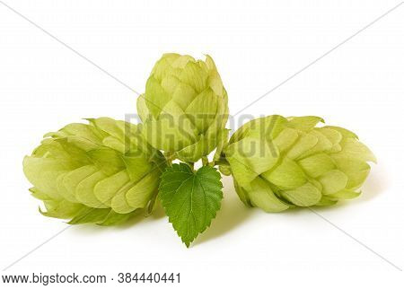 Hops With Leaf Isolated On White Background