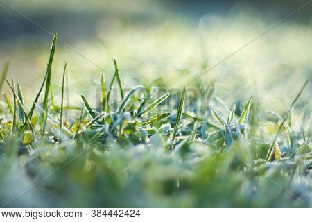 The Green Grass Was Covered With Frost. The First Frosts In Late Autumn