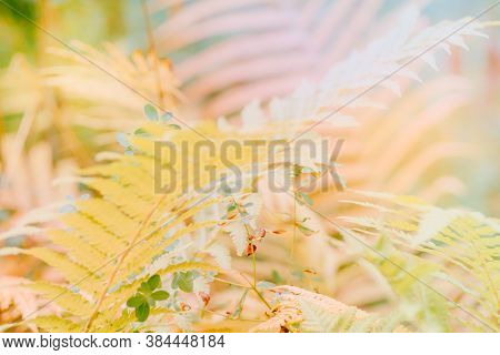 Abstract Defocused Nature Background With Autumn Leaves And Bokeh