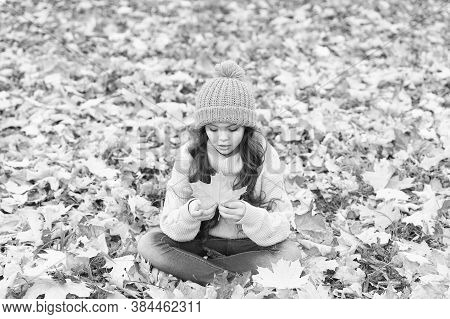 The Color Is Vibrant. Little Child Hold Maple Leaf. Adorable Little Baby Play With Yellow Foliage. C