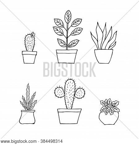 Potted Plants Collection, Doodle Design. Succulents And Home Plants. Hand Drawn Illustration. Set Of